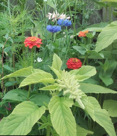 Blühendes Ökosystem